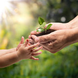 Life in your hands - plant whit garden background. Hands of a child taking a plant from the hands of a man - grass background Stock Image