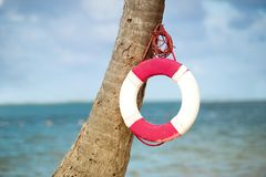 Lifebuoy hanging on a palm tree on the background of the sea. Lifebuoy hanging on a palm tree on the background of the sea Stock Images