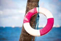 Lifebuoy hanging on a palm tree on the background of the sea. Lifebuoy hanging on a palm tree on the background of the sea Royalty Free Stock Photography