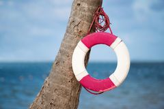 Lifebuoy hanging on a palm tree on the background of the sea. Lifebuoy hanging on a palm tree on the background of the sea Royalty Free Stock Image
