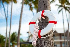 Lifebuoy hanging on a palm tree on the background of the sea. Lifebuoy hanging on a palm tree on the background of the sea Stock Photography