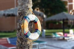 Lifebuoy hanging on a tree by the pool Stock Photo
