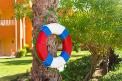 Lifebuoy hanging on a tree by the pool Royalty Free Stock Images