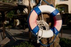 Lifebuoy on palm tree Stock Photo