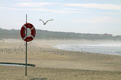 Lifebuoy and seagull Royalty Free Stock Images