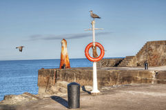 Lifebuoy and seagulls. Harbourside image with seagulls and lifebuoy Stock Photography