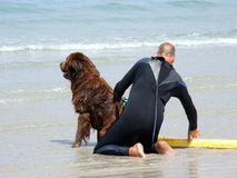 Lifeguard Dog. This dog is being trained to rescue people in difficulty in the sea Royalty Free Stock Photo
