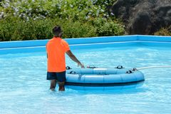 Lifeguard in the pool, rear view. Image of lifeguard in the pool, rear view stock photography