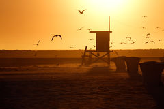Lifeguard Tower and Sea Gull in Sunset royalty free stock photos