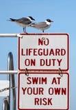 Lifeguards da gaivota Imagem de Stock