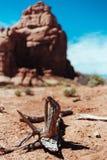 Lifeless. Dead branch in Utah desert Stock Photography