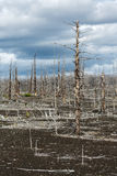 Lifeless desert landscape of Kamchatka: Dead wood (Tolbachik Vol Royalty Free Stock Photos