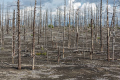 Lifeless desert landscape of Kamchatka: Dead wood (Tolbachik Volcano) Stock Image