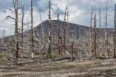 Lifeless desert landscape of Kamchatka Peninsula: Dead wood (Tol Royalty Free Stock Photos