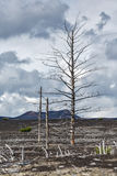 Lifeless desert landscape of Kamchatka Peninsula: Dead wood (Tol Stock Photos