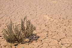 Lifeless earth. The lonely dried-up bush in the lifeless desert royalty free stock photos