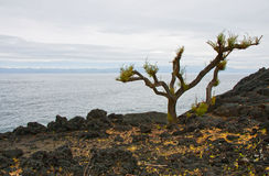 Lifeless landscape of volcanic island Royalty Free Stock Photos
