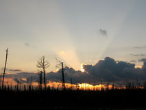 Lifeless sunset. Sunset in lifeless forest in Siberia royalty free stock photos