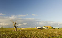 Lifeless Tree. A lone dead tree stands in a paddock with evidence of a still working mine not far from Daylesford, Victoria royalty free stock images