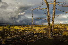 Lifeless trees in the Dead  Forest Stock Photography