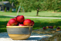 Lifes a bowl of apples. A bowl of beautiful red apples sit  on a stone wall with the orchard in the background Stock Photo