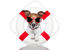 Lifesaver dog Stock Photo