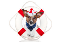 Lifesaver dog. Dog with red and white lifesaver and a hat Stock Photography
