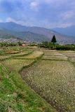 Farmland in Bhutan Royalty Free Stock Image