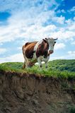 Lifestyle concept beautiful green valley landscape on background. Panoramic photo of flock of cows.on the pasture in the sunny day stock images