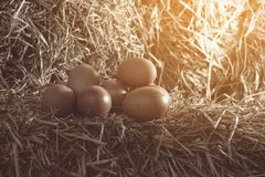 The lifestyle of the farm in the countryside, fresh eggs from th. E farm in the countryside royalty free stock image