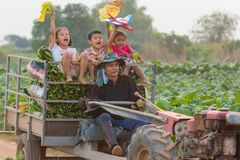 Lifestyle of a farmer family at tabacco. Stock Image