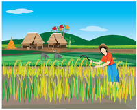 Lifestyle of farmer Stock Photography