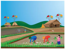 Lifestyle of farmer Stock Image