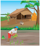 Lifestyle of farmer Stock Images