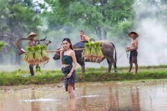 Lifestyle of rural Asian women in the field countryside thailand Stock Images