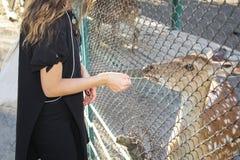Lifestyle in Zoo. Girl feeds deer in zoo Stock Photos