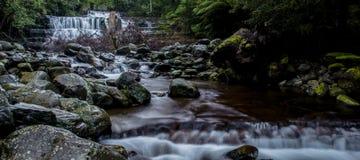 Liffey cade nella regione delle parti centrali, Tasmania Fotografia Stock Libera da Diritti