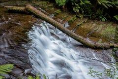 Liffey cade nella regione delle parti centrali, Tasmania Fotografia Stock