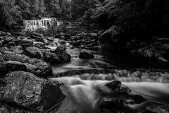 Liffey cade nella regione delle parti centrali, Tasmania Immagine Stock Libera da Diritti