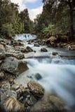 Liffey faller övrekaskaden, Tasmanien, Australien fotografering för bildbyråer