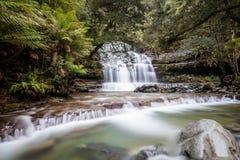 Liffey faller lägre kaskad i Tasmanien, Australien fotografering för bildbyråer