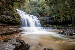 Liffey faller lägre kaskad i Tasmanien, Australien arkivfoton