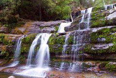 Liffey Falls royalty free stock image