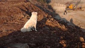 Lifre de chien image stock