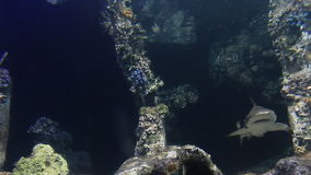 Lift of underwater. Rayong aquarium , Eastern of Thailand stock video footage