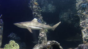 Lift of underwater. Rayong aquarium , Eastern of Thailand stock footage