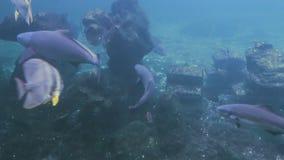 Lift of underwater stock footage