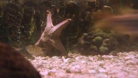 Lift of underwater stock video