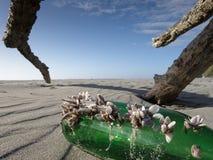 Lifta skaldjur som fästas till en grön glasflaska som tvättas upp på en västkustenstrand, Nya Zeeland royaltyfria bilder