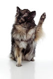 Lifting Paw Stock Images